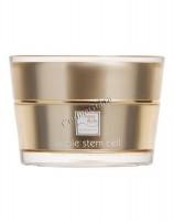 Beauty style Apple stem cell rejuvenating face night cream (Лифтинговый ночной крем для лица «аpple stem cell»), 30 мл - купить, цена со скидкой